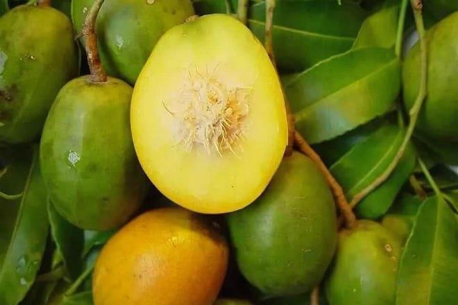 Яблоко Цитеры или амбарелла