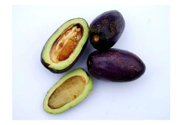 Что из себя представляет фрукт дакриодессъедобный?