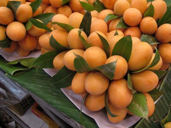 Сбор урожая тайской сливы