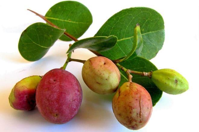 Плоды икако