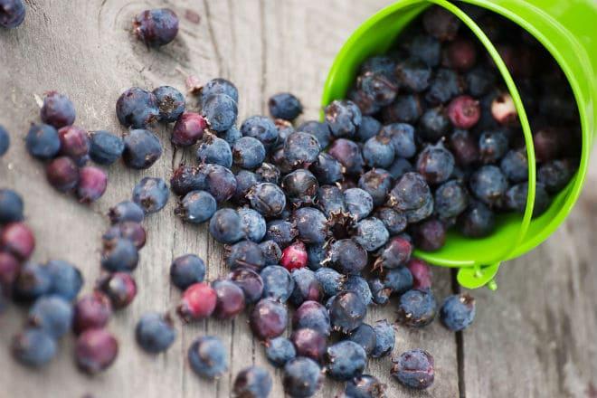 Урожай ягод ирги