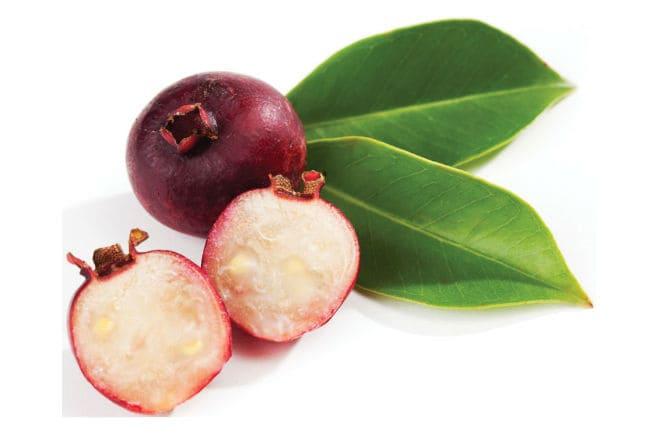 Что из себя представляет фрукт земляничная гуава?