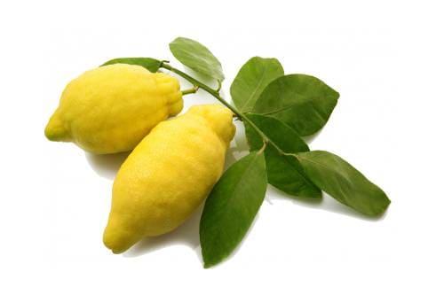Как выглядит фрукт цитрон?