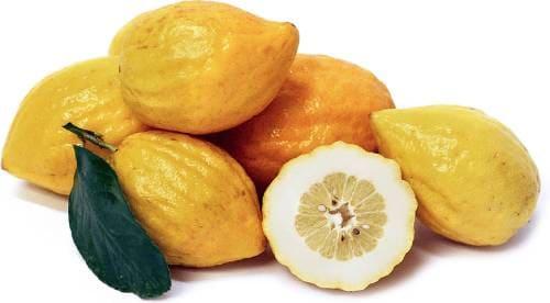 Плоды растения цедрат