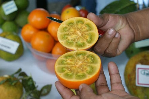 Плоды наранхиллы в разрезе