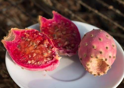 Как есть плоды опунции?