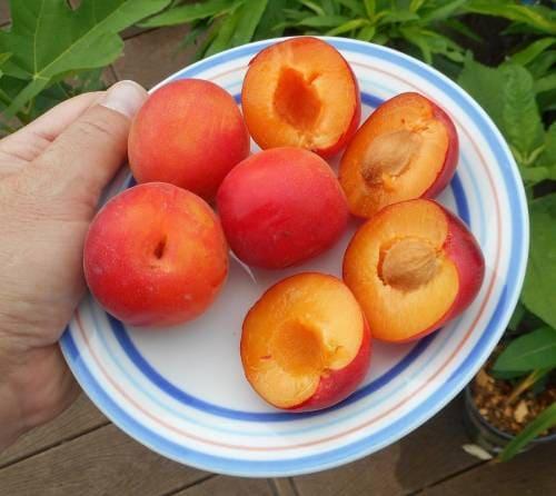 Как едят фрукт шарафуга?