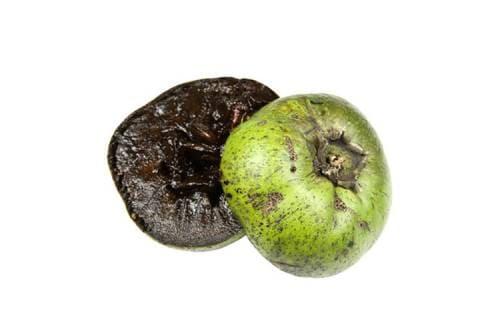 Как выглядит фрукт черная сапота?